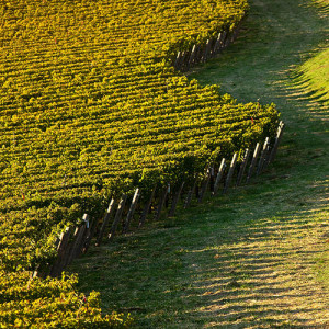 Kenzo Winery-1311.jpg